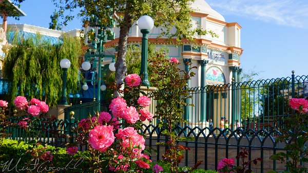 Disneyland Resort, Disneyland60, Paradise, Pier, Rose, Flower, Nature
