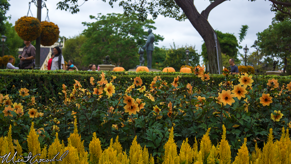 Disneyland Resort, Disneyland, Hub, Flowers