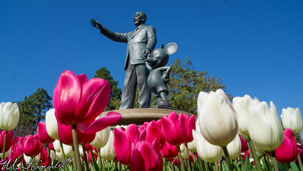 Disneyland Resort, Disneyland, Hub, Walt, Mickey, Statue, Partners, Tulip, Flower
