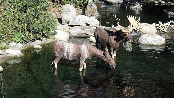 Disneyland Resort, Disneyland, Mark Twain, Rivers of America, Moose