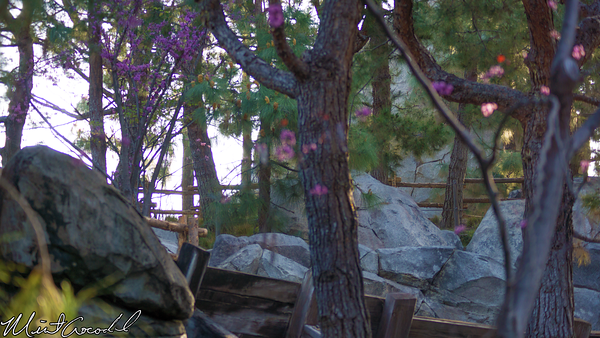 Disneyland Resort, Disney California Adventure, Grizzly, River, Run, Fall, Protection
