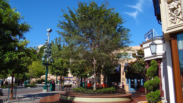 Disneyland Resort, Disney California Adventure, Buena Vista Street, Tree