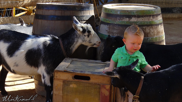 Disneyland Resort, Disneyland, Big Thunder Ranch, Goats, Kid
