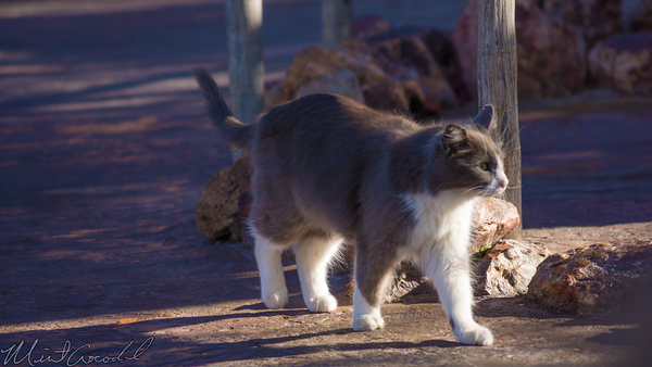 Disneyland Resort, Disneyland, Frontierland, Cat