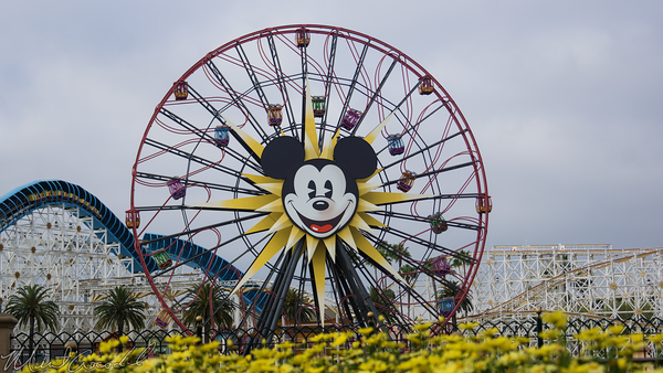 Disneyland Resort, Disney California Adventure, Paradise, Pier, Mickey, Fun, Wheel