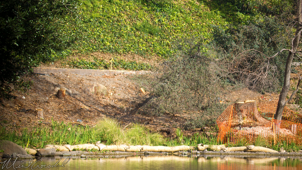 Disneyland Resort, Disneyland, Critter, Country, Star, Wars, Land, Construction, River, Bend, Bank, Tree