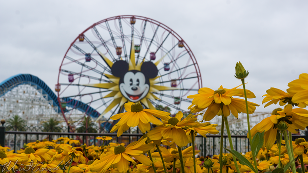 Disneyland Resort, Disneyland60, Disney California Adventure, Paradise, Pier, Park, Flower