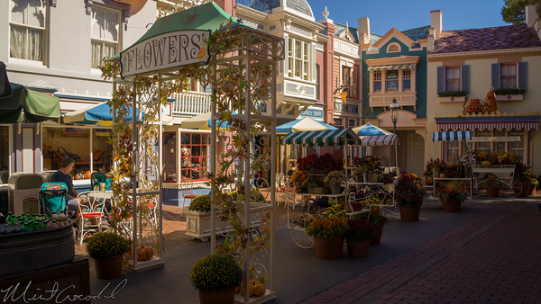 Disneyland Resort, Disneyland60, Halloween, Time, Disneyland, Main Street U.S.A., Center, Street, Flower, Autumn, Market