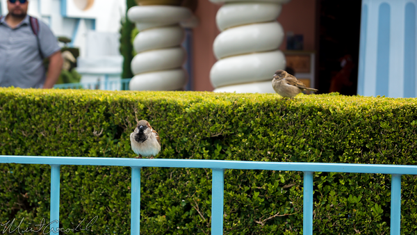 Disneyland Resort, Disneyland, Fantasyland, Bird, Nature