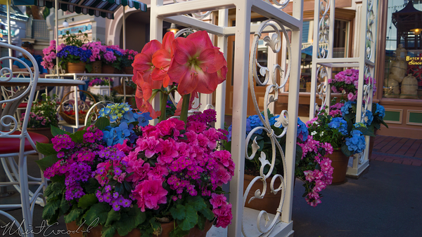 Disneyland Resort, Disneyland60, Disneyland, Main Street U.S.A., Flower, Market