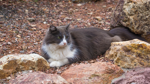 Disneyland Resort, Disneyland, Frontierland, Big, Thunder, Mountain, Railroad, Cat