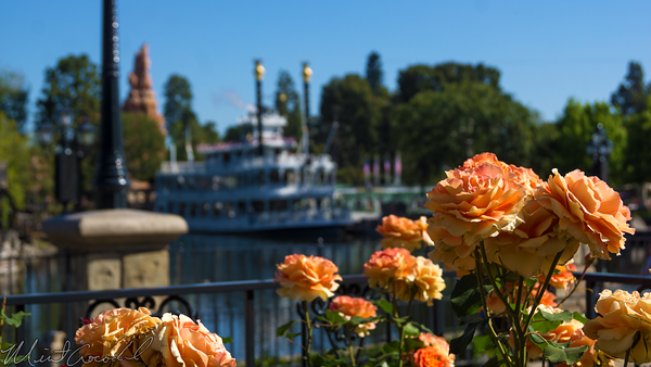 Disneyland Resort, Disneyland, Frontierland, River, America, Mark, Twain, Flower