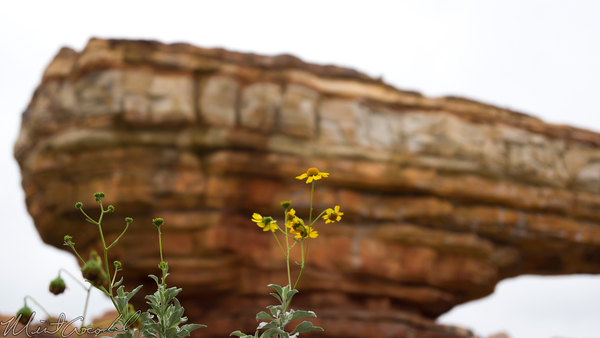 Disneyland Resort, Disneyland60, Disney California Adventure, Cars Land, Radiator, Springs, Racers, Nature, Flower