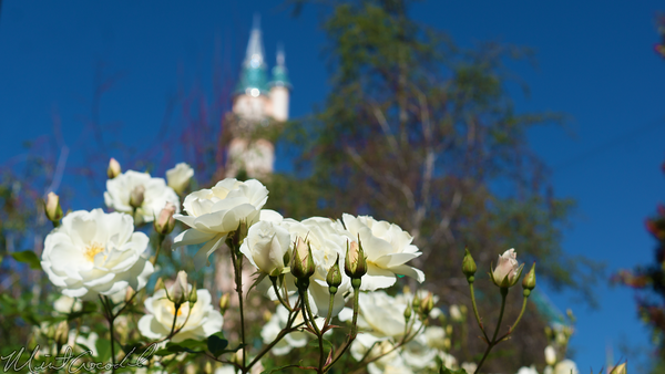 Disneyland Resort, Disneyland, Sleeping, Beauty, Castle, Flower