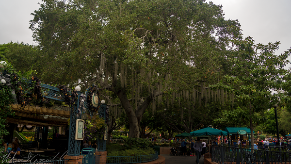 Disneyland Resort, Disneyland60, Halloween, Time, Disneyland, New, Orleans, Square, Spanish, Moss, Tree, French, Market