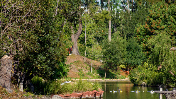 Disneyland Resort, Disneyland, Critter, Country, Star, Wars, Land, Construction, River, Bend, Bank, Tree, Dam, Disney